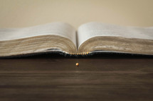 open Bible and mustard seed