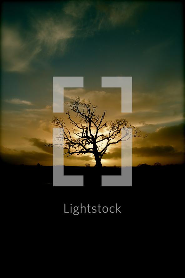 silhouette of a solo barren tree