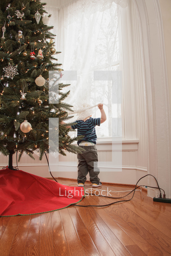 Boy hiding in the curtains behind the Christmas tree.