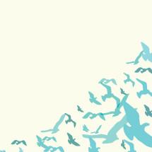 seagulls flying.