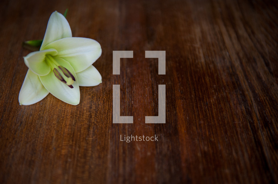 Easter lily on wood table