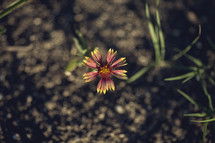 flower in dirt