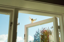 a bird flying out of a window