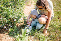 toddler boy and mother picking blueberries