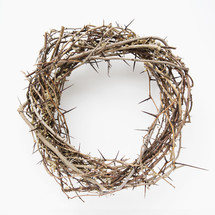 a crown of thorns isolated on white.