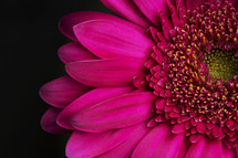 Close-up of a bright pink flower.