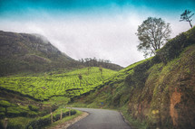 The green hills of farmland in India.
