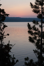 silhouettes of pine trees on a shore at sunset
