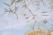 seed pods on a branch