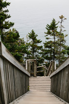 wooded steps to a shore