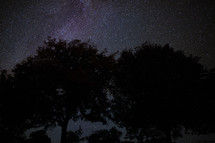 stars in the night sky above tree tops