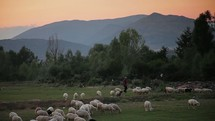 Man herding sheep across a meadow near mountains at dusk.