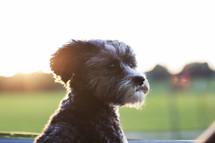 a puppy in a window