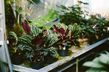 plants in a greenhouse