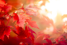 Autumn Thanksgiving Leaves Background