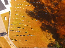 aerial view over a cemetery