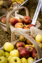 Baskets of Fall Apples