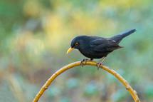 a black bird on an arch