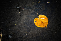 yellow leaf on black Bali sands