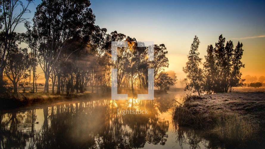 morning sunlight on a pond