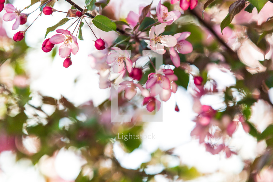 pink flowers on a tree branch