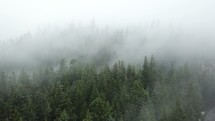 fog moving over an evergreen forest