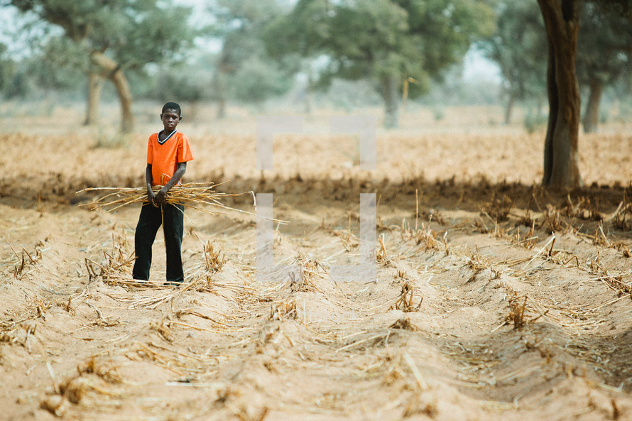 A black boy gathering crops from a field
