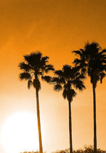 A set of three Palm Trees stand against a setting sunset and orange glowing sky as the sun sets on another day in a tropical setting.