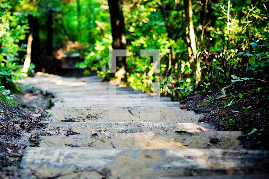 Steps lead into a forest