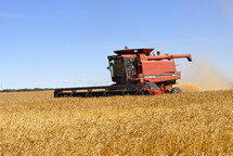 Combine harvester harvesting wheat. fall, season, seed, orange, red.