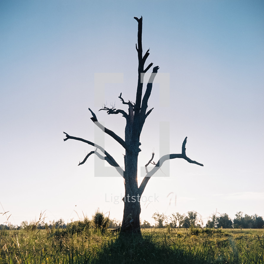 a bare and broken tree in a field alone