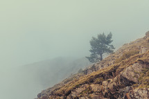 French landscape - Les Ecrins. Tree in the mountains with foggy background.
