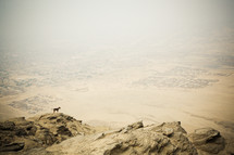 Dog on a rocky cliff overlooking the desert.