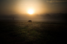 grazing horse at sunrise