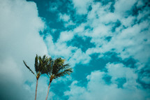 tops of palm trees against a cloudy sky