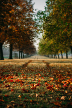Fall leaves and green grass on a long narrow path