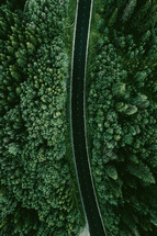 highway through a green forest