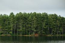 pine trees on a lake shore