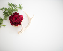 red roses and antler