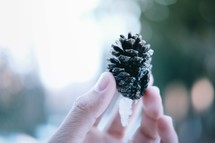 hand holding up a pine cone with snow on it