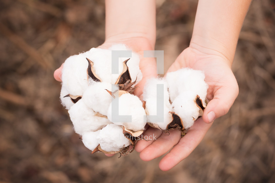 cupped hands with cotton