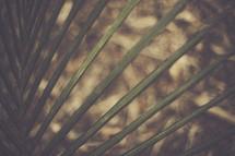 palm fronds closeup