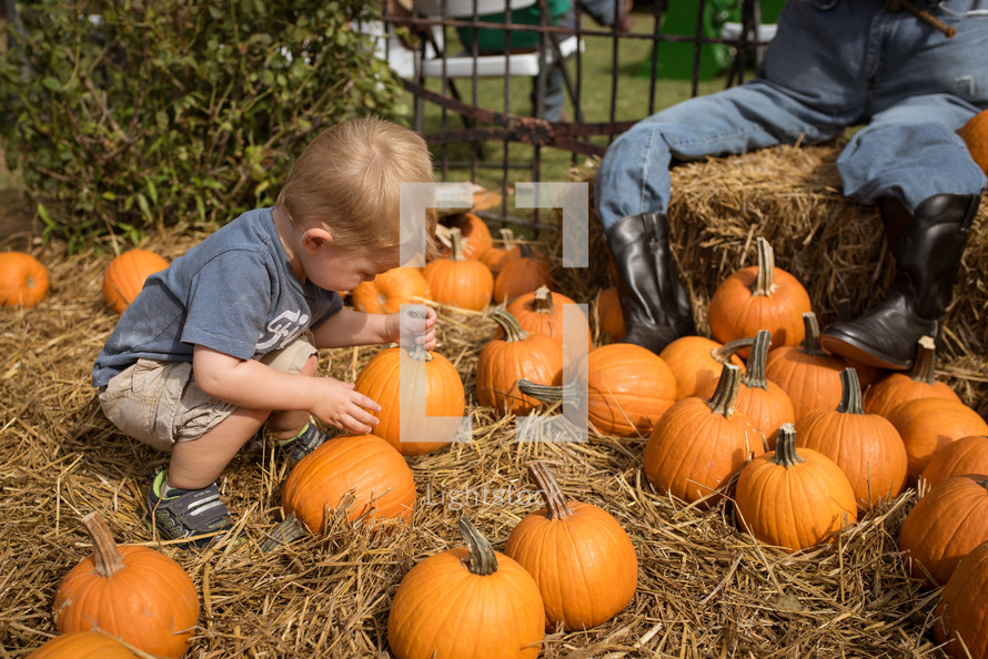 a toddler boy picking out a pumpkin