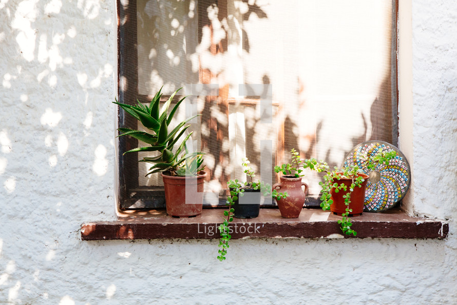 potted plants in a window