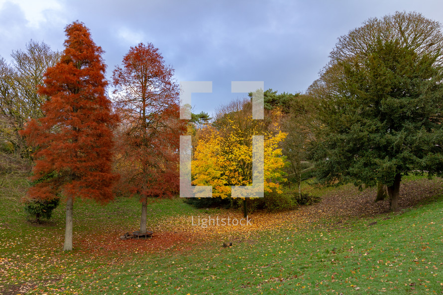 A grove of colorful trees on a sunny autumn day in Williamson Park, Lancaster, Lancashire, England, United Kingdom