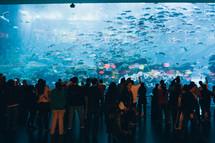 crowd observing fish at an aquarium