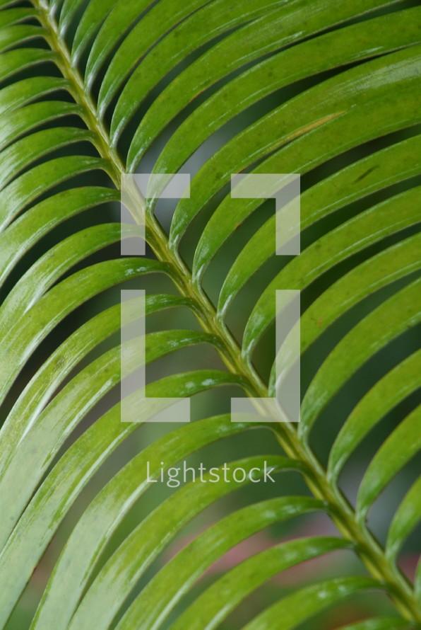 Long, thin, tropical plant leaves