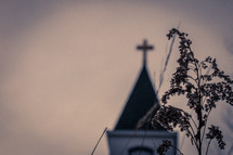 Tall grass in foreground with church steeple in background blurred out