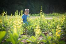 toddler boy, standing in a garden