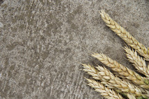 Wheat on concrete background